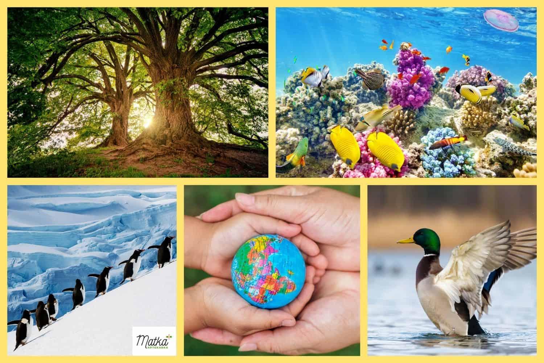 utylizacja leków, porządki wdomowej apteczce, dbanie oekologię, natura, środowisko naturalne, lodowce, oceany, lasy, Matka Aptekarka