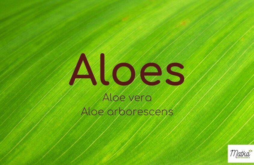 Na odporność dla dzieci, Aloes, Matka Aptekarka