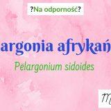 Na odporność dla dzieci, Pelargonia afrykańska, Umckaloabo, Pelavo, Pelafen, Zatogrip, Pelbez, Pneumolan Matka Aptekarka